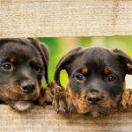 Terracanis: quali sono gli ingredienti di questo cibo per cani?
